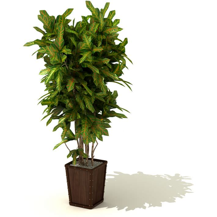 tall green leafy plant in a brown square pot 3d model 1