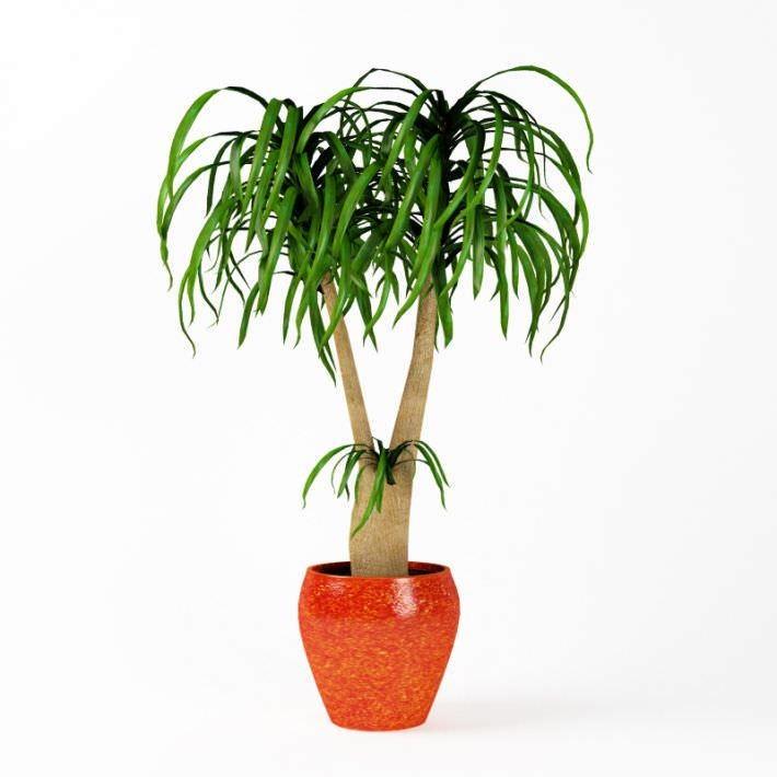 plant indoor potted plant 3d model