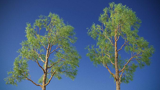 XfrogPlants Eucalyptus Mini Pack