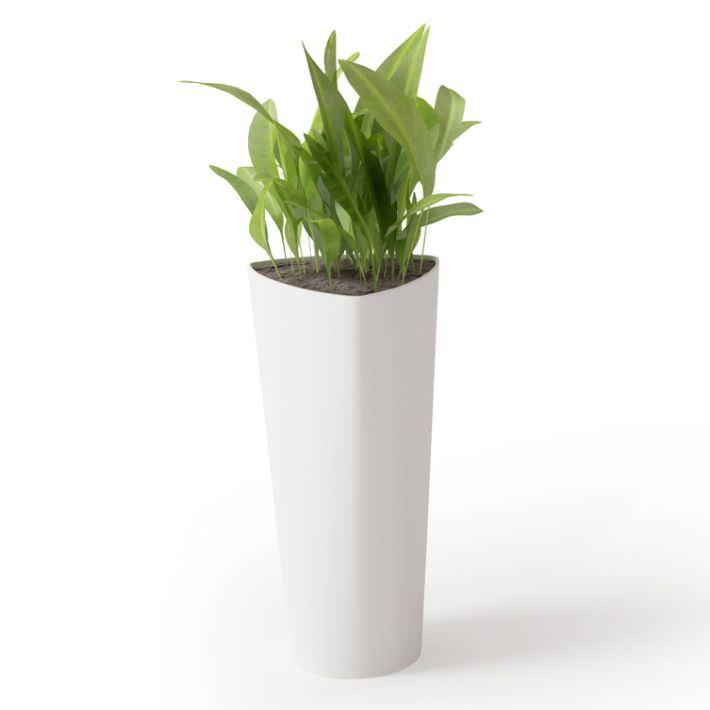 potted plant in tall white vase 3d model obj 1