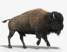 bison fur animated 3d model rigged animated max