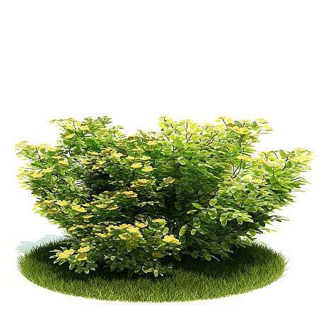 planted green bush 3d model  1