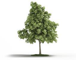 3D Sessile Cornish Oak Tree