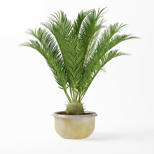 potted palm plant 3d model obj mtl 1