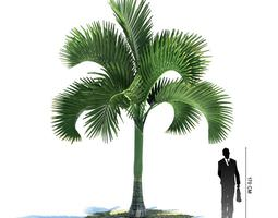 Exotic Palm Tree 3D