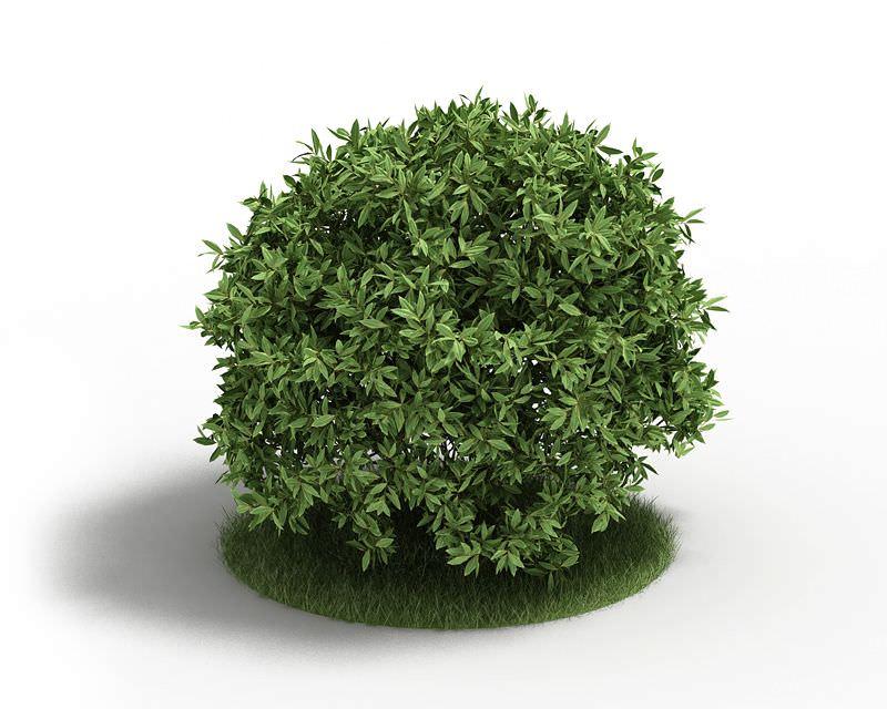 Artificial Green Bush 3d Model Cgtrader Com