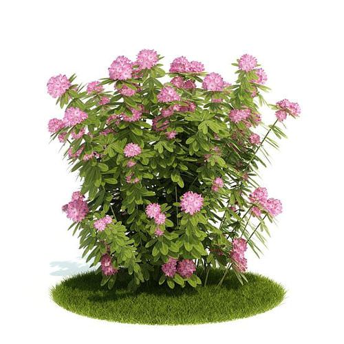 Pink Flowering Bush3D model