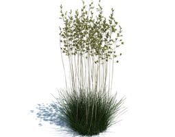 Flowering Aquatic Plant 3D