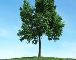 Green Leafed Tree 3D model green plantation