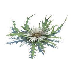 3D model plant Green Leafed Plant