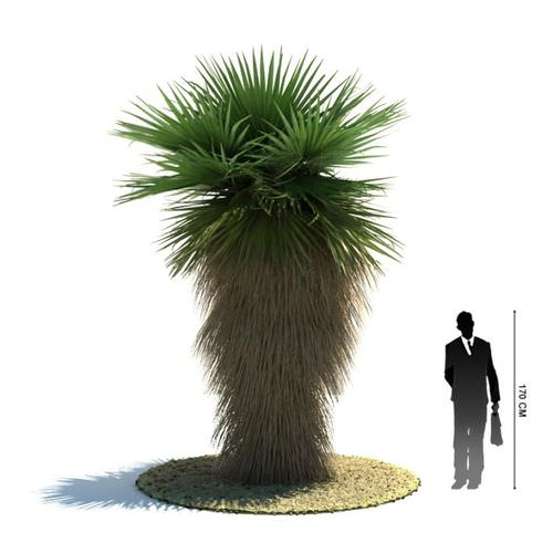 Green  Palm Tree3D model