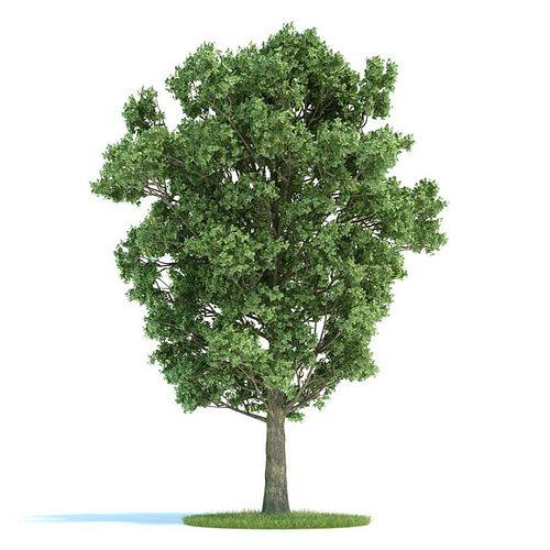 green leafed tree 3d model  1