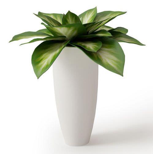 Green Potted Plant : largegreenpottedplant3dmodeld4c661e9 7069 41c2 a698 4e2911509e90 from cgtrader.com size 499 x 500 jpeg 17kB