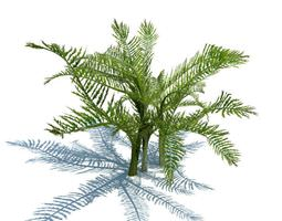 Evergreen Branches 3D