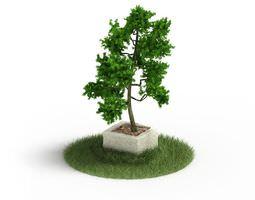 3D model Ornamental Tree In A Stone Planter