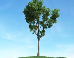 Tall Tree With Long Trunk 3D