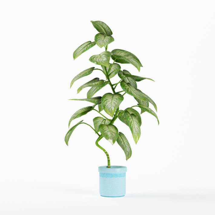 Tall Green House Plant 3d Model