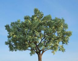 3D model Large Green Tree
