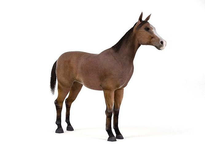 brown horse 3d model obj mtl 1