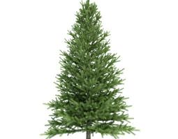 3D Conifer Tree