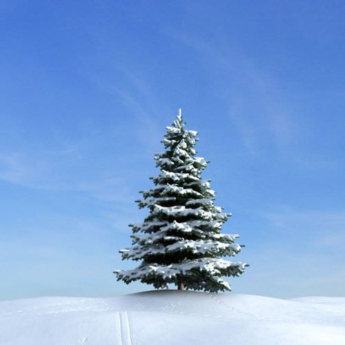 Snow Covered Pine Tree3D model
