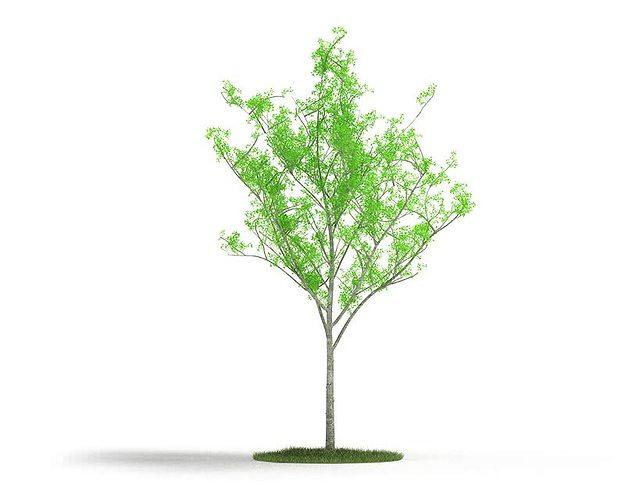 young green tree 3d model obj mtl 1