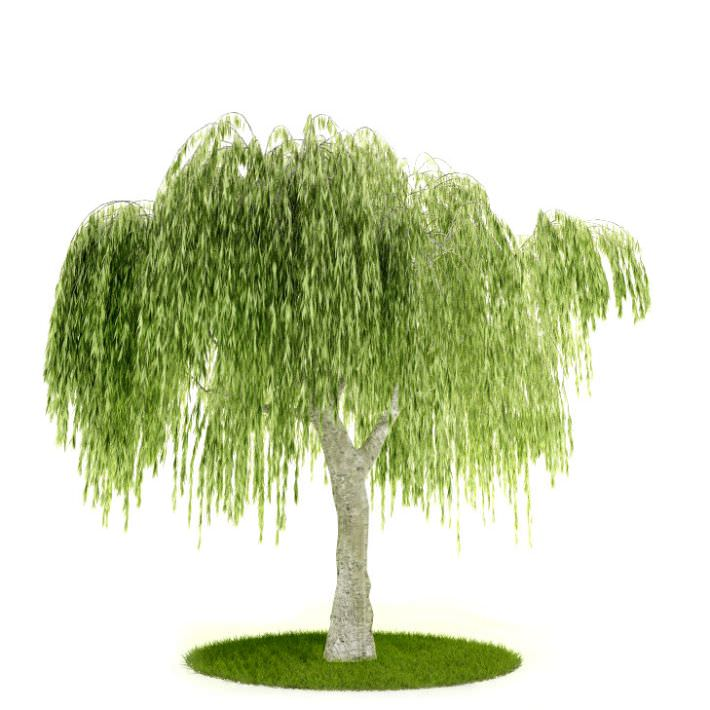 Tree With Hanging Leaves | 3D model