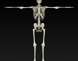 3D Realistic Human Skeleton