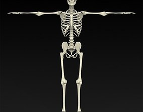3D Realistic Human Skeleton