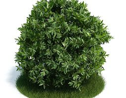 shrub   small leaves 3d