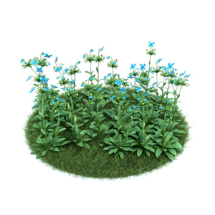 Patch of himalayan blue poppy flowers 3d model cgtrader patch of himalayan blue poppy flowers 3d model obj 1 mightylinksfo