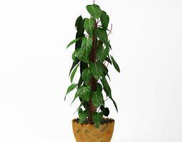 Pot Leafy Plant 3D model