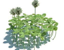 Clover Plants And Flowers 3D model