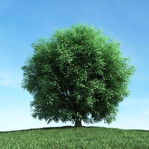Very Leafy Green Tree3D model