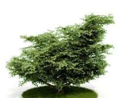 outdoor decorative shrub 3d model