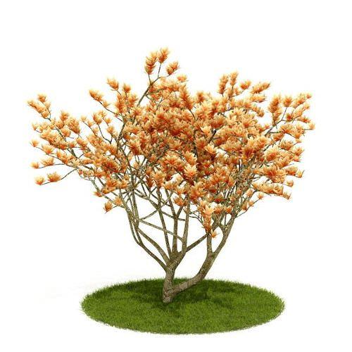 Flowering Golden Tree3D model