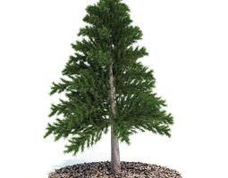 3d model decorative miniature tabletop evergreen pine tree