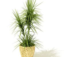 grassy potted plant 3d