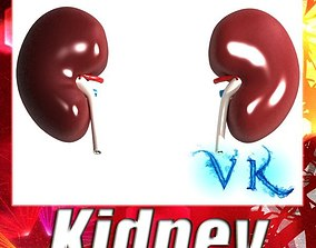Human Kidneys 3D