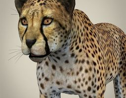 Realistic Cheetah 3D Model