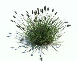 Bushy Grass Plant Casting Shadows 3D