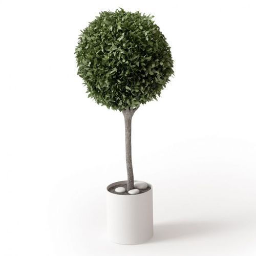 Small Potted Round Green Leaf Tree3D model