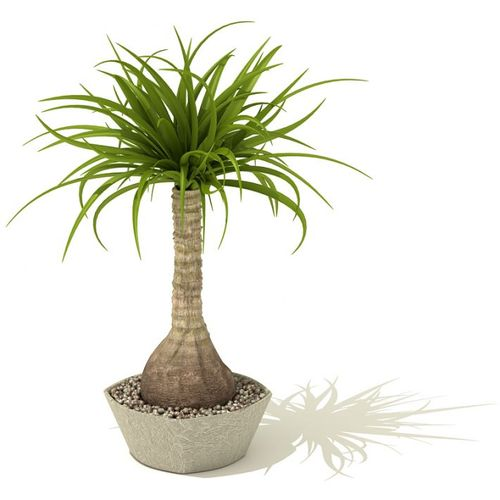 Indoor palm tree 3d model for Pictures of indoor palm plants