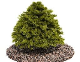 3d model pine tree on top of a bed or layout of cedar mulch