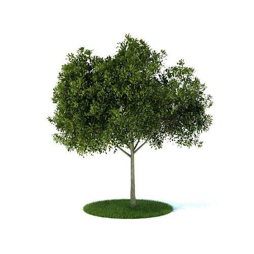 small leafy tree 3d model obj 1