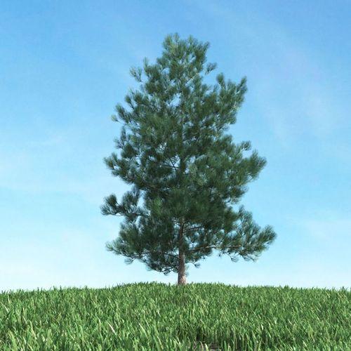 Green Pine Tree3D model