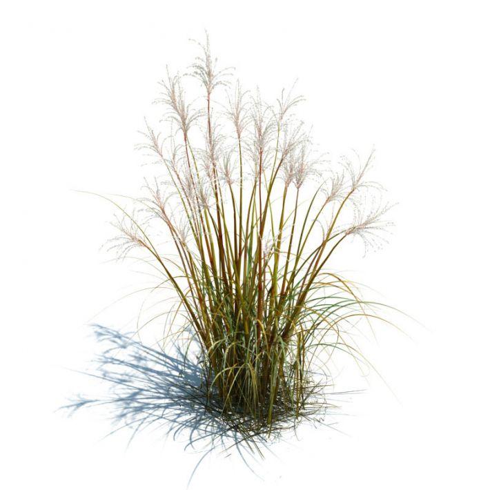 Tall grass for landscape 3d model obj dwg for Like long grasses