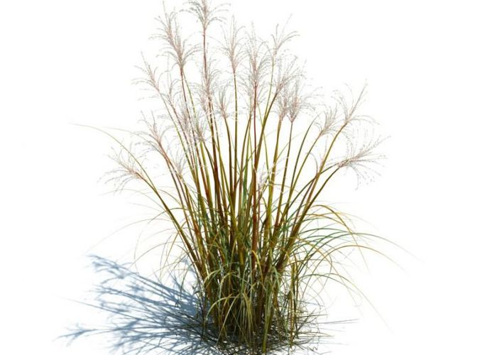Tall Grass For Landscape 3d Model Cgtrader Com