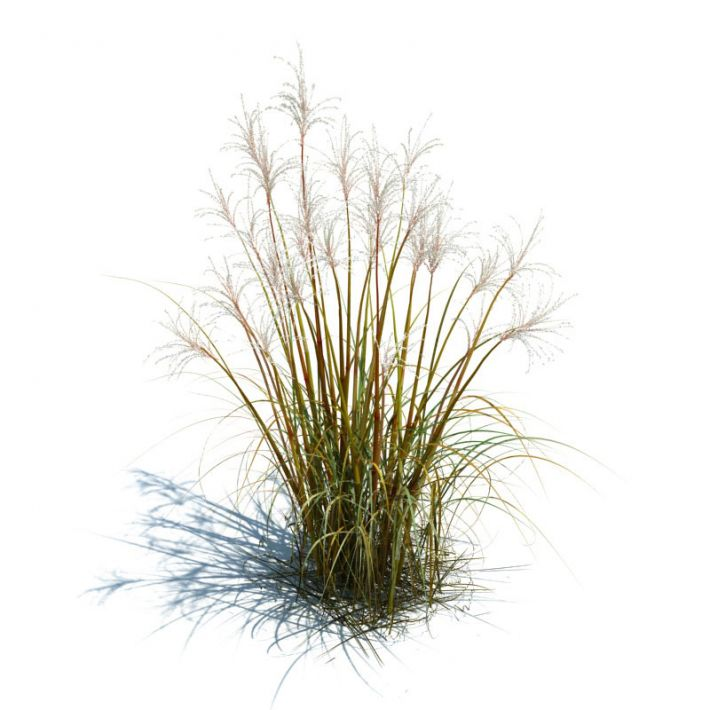 Tall grass for landscape 3d model Long grass plants