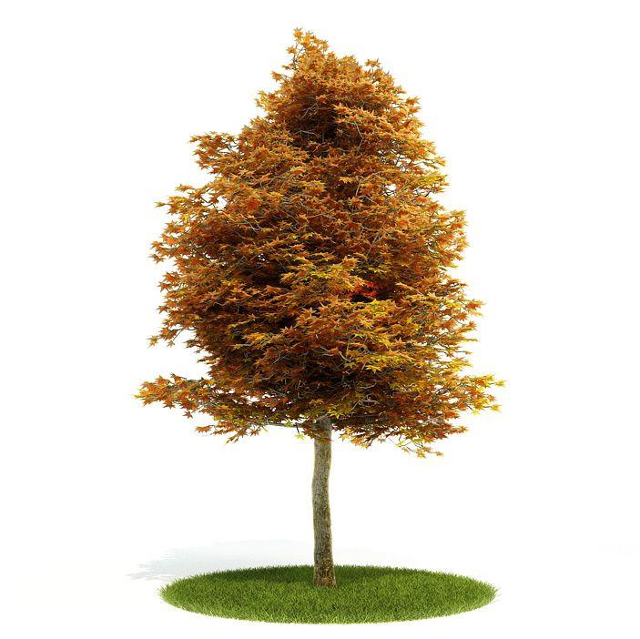 Deciduous tree turning orange 3d model for Garden deciduous trees